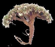 Pasuchaca (Geranium dielsianum, Kakost skvrnitý)