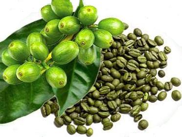 Zelená káva (Coffea arabica)