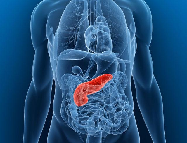 Hladovka může zvrátit cukrovku a uzdravit pankreas (slinivku)