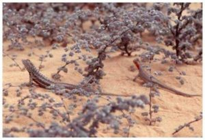 flor de arena