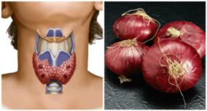 cervena-cibule
