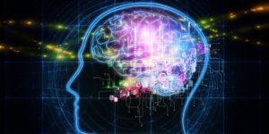 mozek