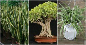 3 rostlinky
