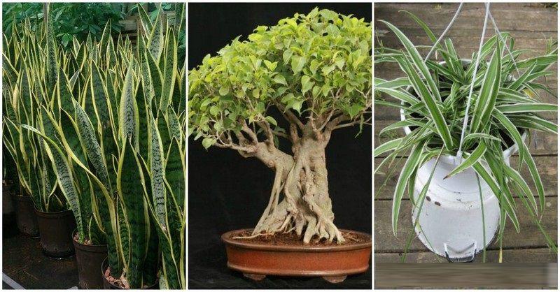 3 rostliny, které generují kyslík i vnoci. Dejte si jednu znich do ložnice