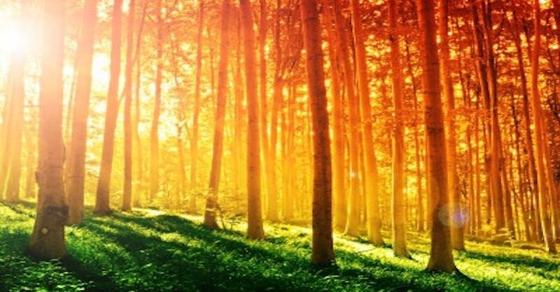 Pět úžasných vlastností slunečního světla, o kterých jste dosud neslyšeli