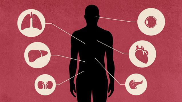 Jak detoxikovat každý orgán a už nikdy nebýt nemocný ani unavený