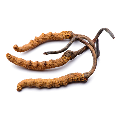 Housenice čínská – Cordyceps sinensis