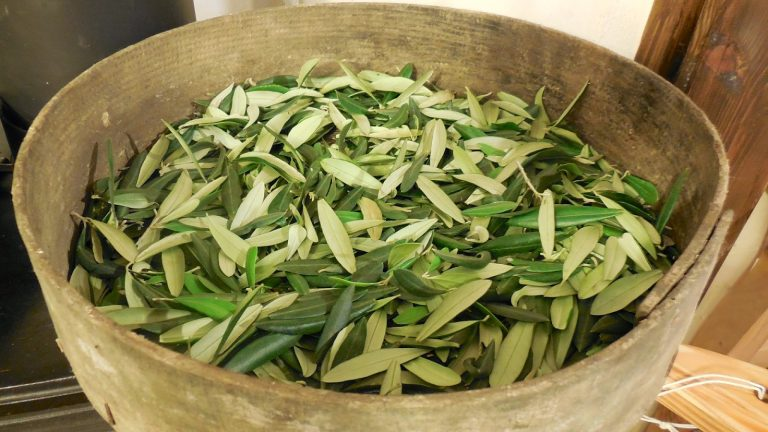 Recept napsaný vBibli: Mocný 3500 let starý lék, který léčí všechny nemoci